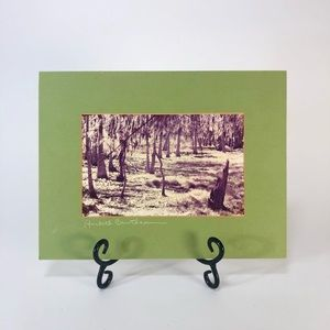 """Vintage signed swamp photography Matted 12"""" x 7"""""""